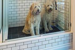 baños-para-perros_6