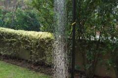 Duchas-de-jardín_5